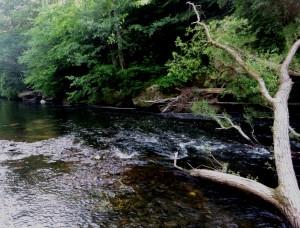 Fluß 1